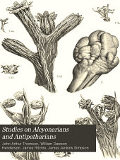 Studies on alcyonarians and antipatharians