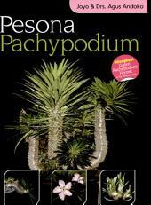 Pesona Pachypodium