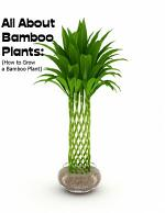 All About Bamboo Plants: (How to Grow a Bamboo Plant)