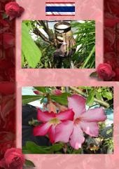 Thai Blumen und Pfanzen Photobuch von Heinz Duthel: Mit schoenen Haus und Garten Blumen, Pflanzen Photos