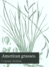 American Grasses: (illustrated)