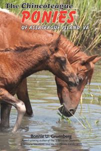 The Chincoteague Ponies of Assateague Island  VA PDF
