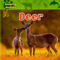 Deer PDF