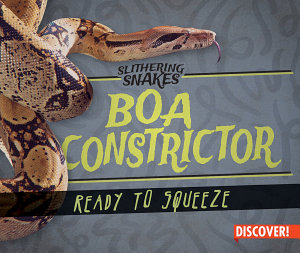 Boa Constrictor: Ready to Squeeze