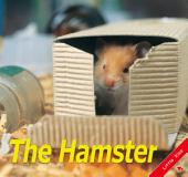 Hamster: Little Kiss42