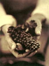 Wine, Food & the Arts, Volume I: Volume 1