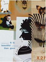 It Is Beautiful...Then Gone