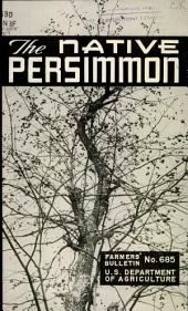 The native persimmon