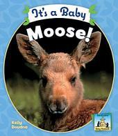 It's a Baby Moose