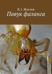 Павук фаланга