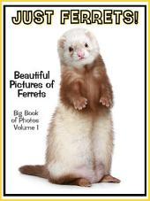 Just Ferrets! vol. 1: Big Book of Photographs & Ferret Pictures