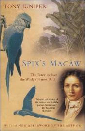 Spix S Macaw