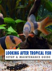 Looking After Tropical Fish