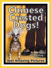 Just Chinese Crested Dogs! vol. 1: Big Book of Photographs & Chinese Crested Dog Pictures