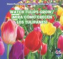 Watch Tulips Grow   Mira Como Crecen Los Tulipanes  PDF