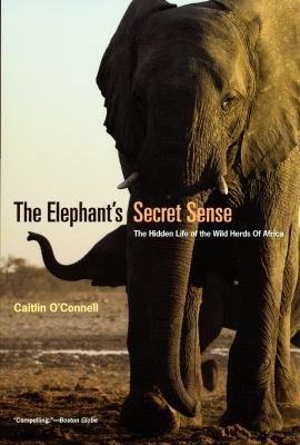 The Elephant s Secret Sense PDF