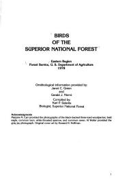 Birds of the Superior National Forest