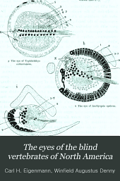 The eyes of the blind vertebrates of North America: I. the eyes of the Amblyopsidae