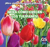 Mira c  mo crecen los tulipanes   Watch Tulips Grow  PDF