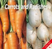 Carrots and Radishes: Little Kiss19