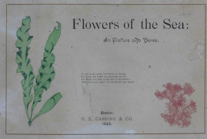The Flowers of the Sea
