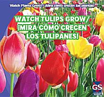 Watch Tulips Grow     Mira c  mo crecen los tulipanes  PDF