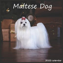 Maltese Dog 2022 Calendar