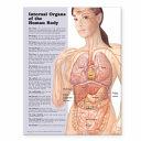 Internal Organs of the Human Body Anatomical Chart