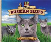 Regal Russian Blues