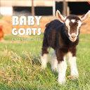 Baby Goats Calendar 2018