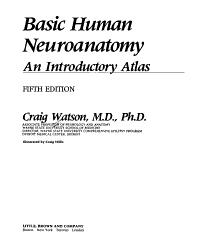Basic Human Neuroanatomy PDF