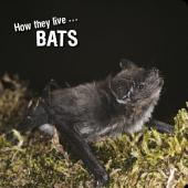 How they live... Bats: Learn All There Is to Know About These Animals!
