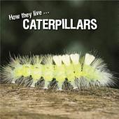 How they live... Caterpillars: Learn All There Is to Know About These Animals!