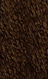 Gridario generale, ossia Collezione di tutte le grida, editti, proclami pubblicati in Milano dal giorno 28 aprile 1799, epoca del felice reingresso dell'armata vittoriosa di Sua Maestà l'Imperatore in avanti \\sino al 2 giugno 1800!: Volume 1