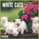 White Cats 2021 Wall Calendar