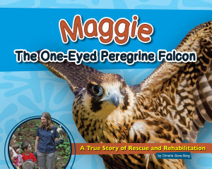 Maggie the One Eyed Peregrine Falcon