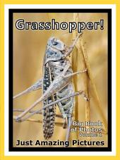 Just Grasshoppers! vol. 1: Big Book of Grasshopper Photographs & Pictures