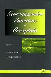Neuromuscular Junctions in Drosophila
