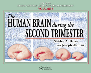 The Human Brain During the Second Trimester PDF