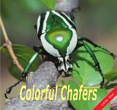 Colorful Chafers: Little Kiss34
