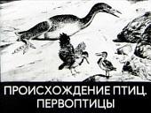 Происхождение птиц. Первоптицы (Диафильм)