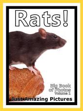 Just Rats! vol. 1: Big Book of Rat Rodent Photographs & Rodents Pictures
