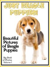 Just Beagle Puppies! vol. 1: Big Book of Photographs & Beagle Puppy Dog Pictures