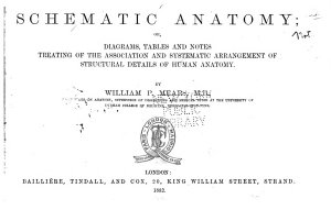 Schematic Anatomy  Or  Diagrams  Tables and Notes Treating of the Association and Systematic Arrangement of Structural Details of Human Anatomy