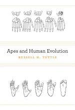 Apes and Human Evolution