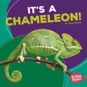 It's a Chameleon!