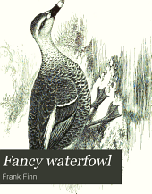 Fancy Waterfowl