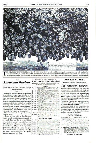 The American Garden PDF