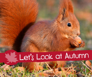 Let s Look at Autumn