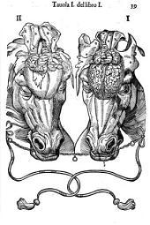 Anatomia del cauallo, Infermita et suoi rimedii: diuisa in due volumi, de quali questo primo in cinque libri... [- volume secondo... nel quale in sei libri...]